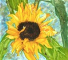 entitled 'Dusk Sunflowers' in watercolour.